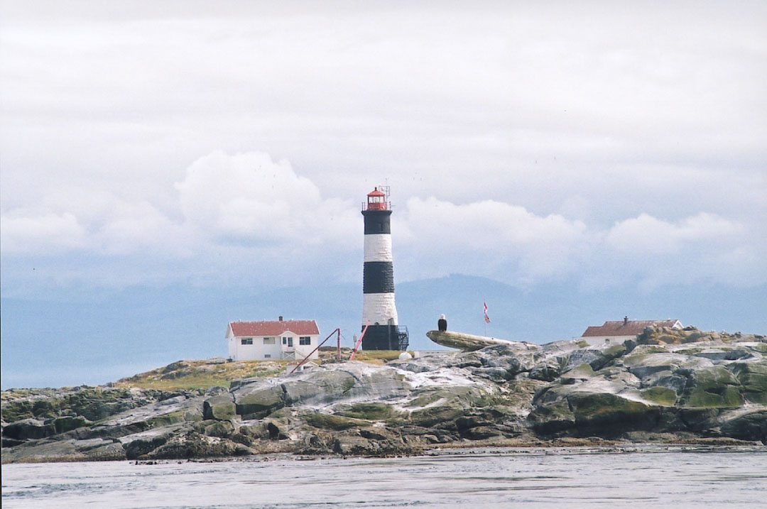 islandeaglemed