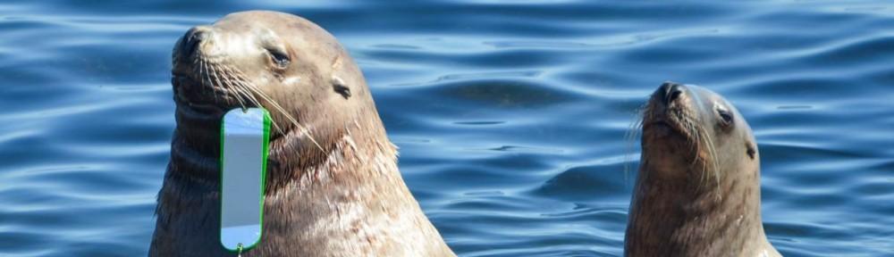 Marine Mammal Injuries