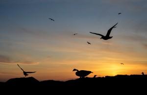 Birdyfull Sunset