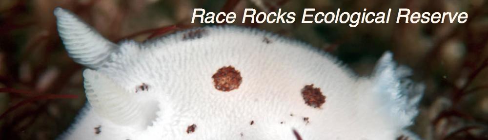 Race Rocks