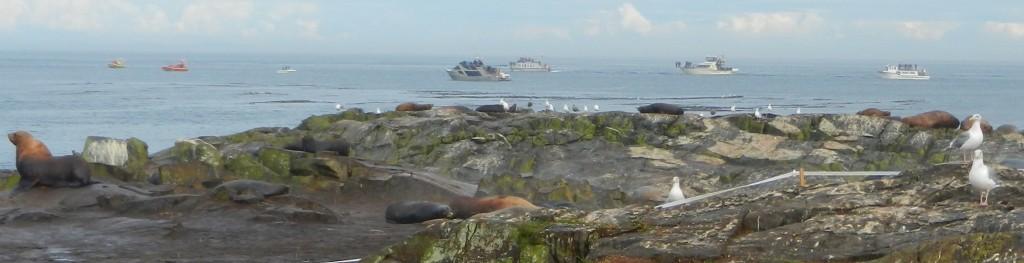 whaleboatssept2113