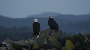 eagles-7682