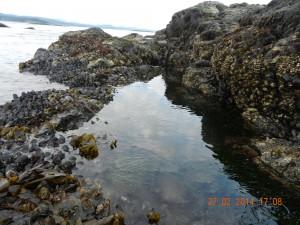 Tidepool 6 at low tide