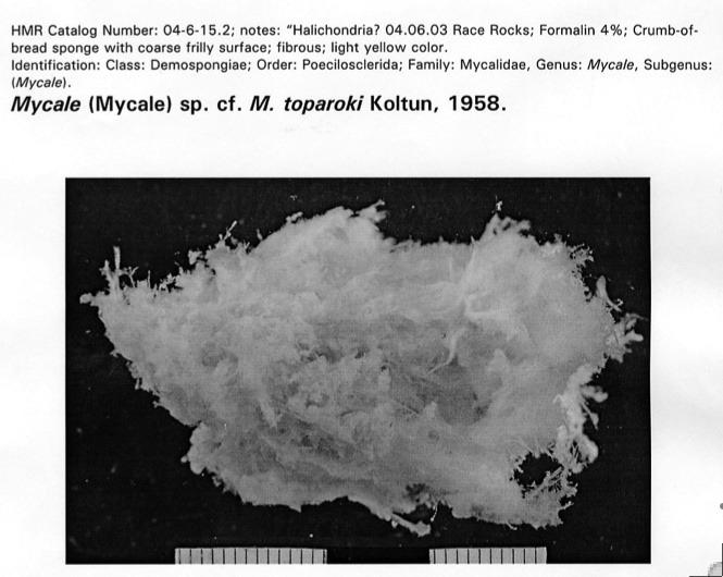 mycale1