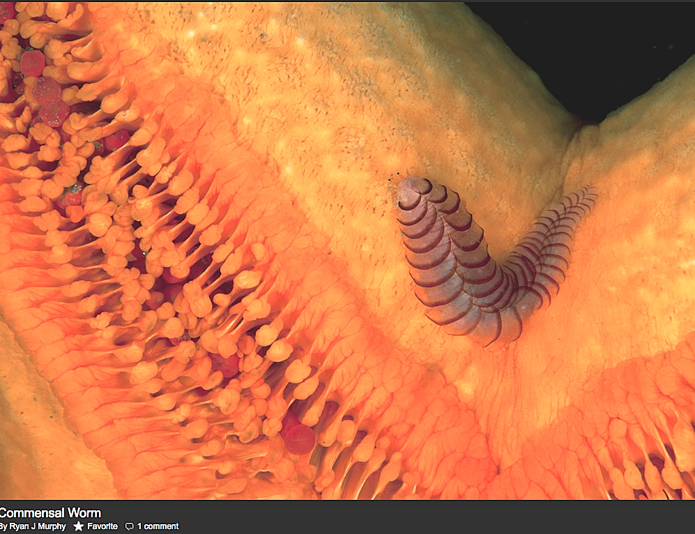 rmscaleworm2012-03-26 at 11.39.25 AM