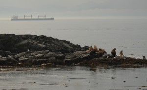 sea lions and shipping lanes