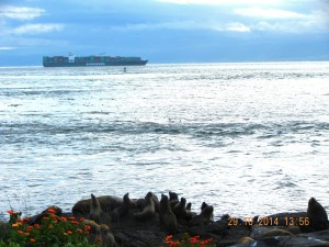 A container ship transits within a few kms of the island. Rosedale Reef marker can be seen less than 2km from the ship on the outbound vessel traffic lane.