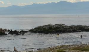 Kayakers disturb sealions too