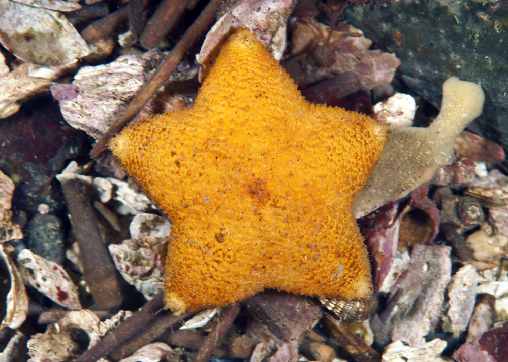 Slime star photograph by Ryan Murphy
