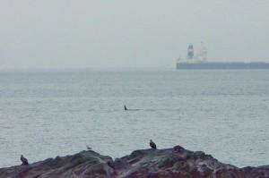 AF-orca-and-shipjan132014