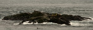 A bald eagle and sea lions on South Islands