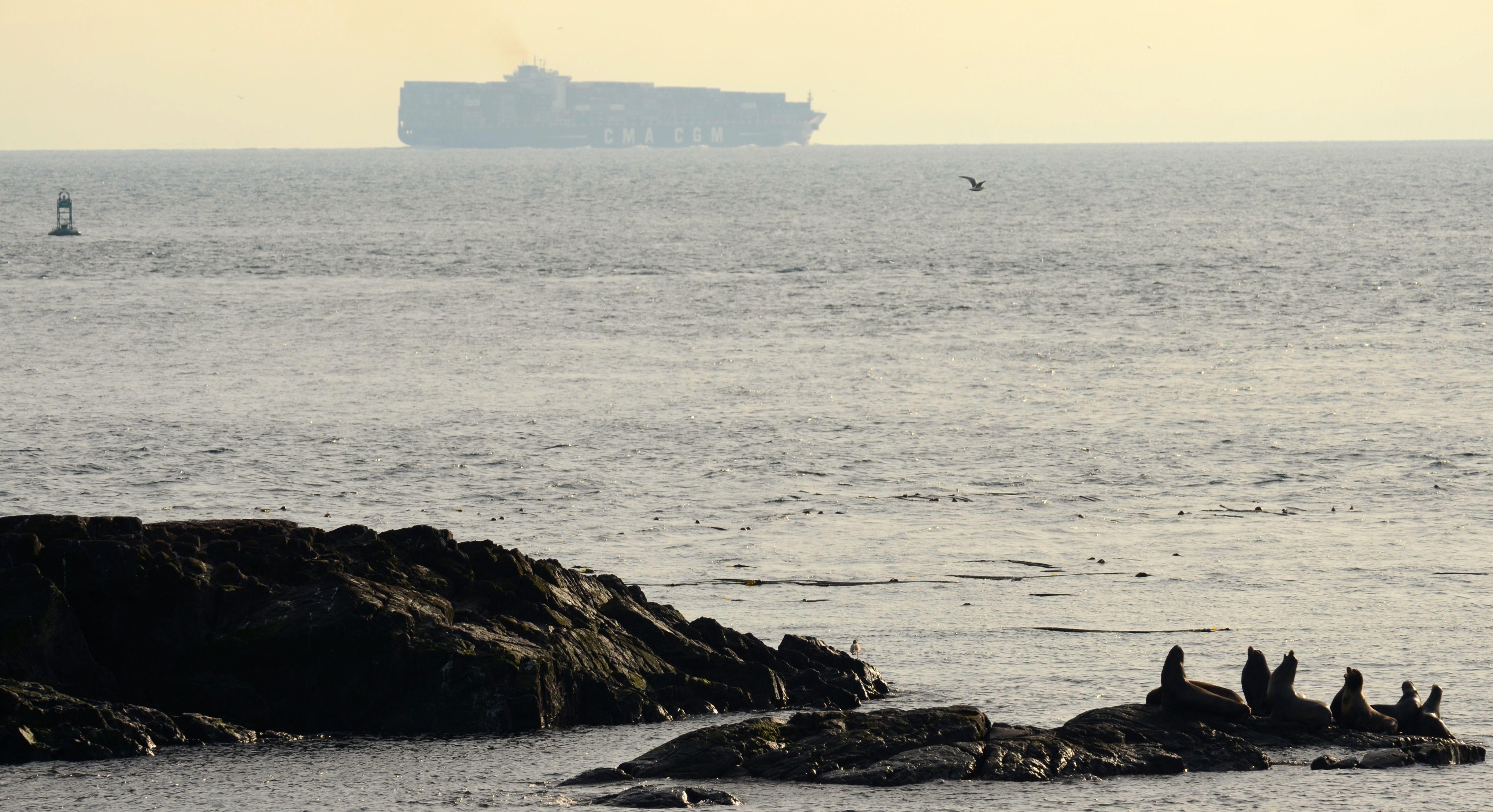 The 335m long cargo ship CMA CGM Bianca passes a few kilometres southeast of Race Rocks.