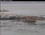 Almost all the sealions are gone from the north side. The boat turns back and heads to the south side.