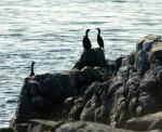 Four cormorants dry off on land.