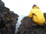 Neel checking the goose-neck barnacles