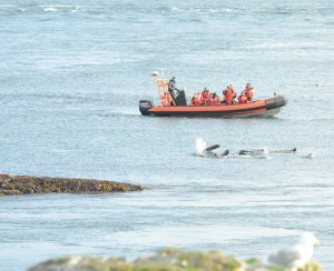 """""""Whale watchers"""" and sea lions that just woke up."""