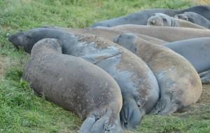 Seal huddle.