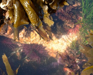 A nice mix of trophic levels in this tide pool.
