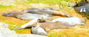 Waking up en masse one seal at a time.
