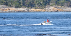 Speedboat in the go-slow zone of the protected area.