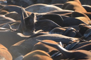 Sea lions waking up with company.