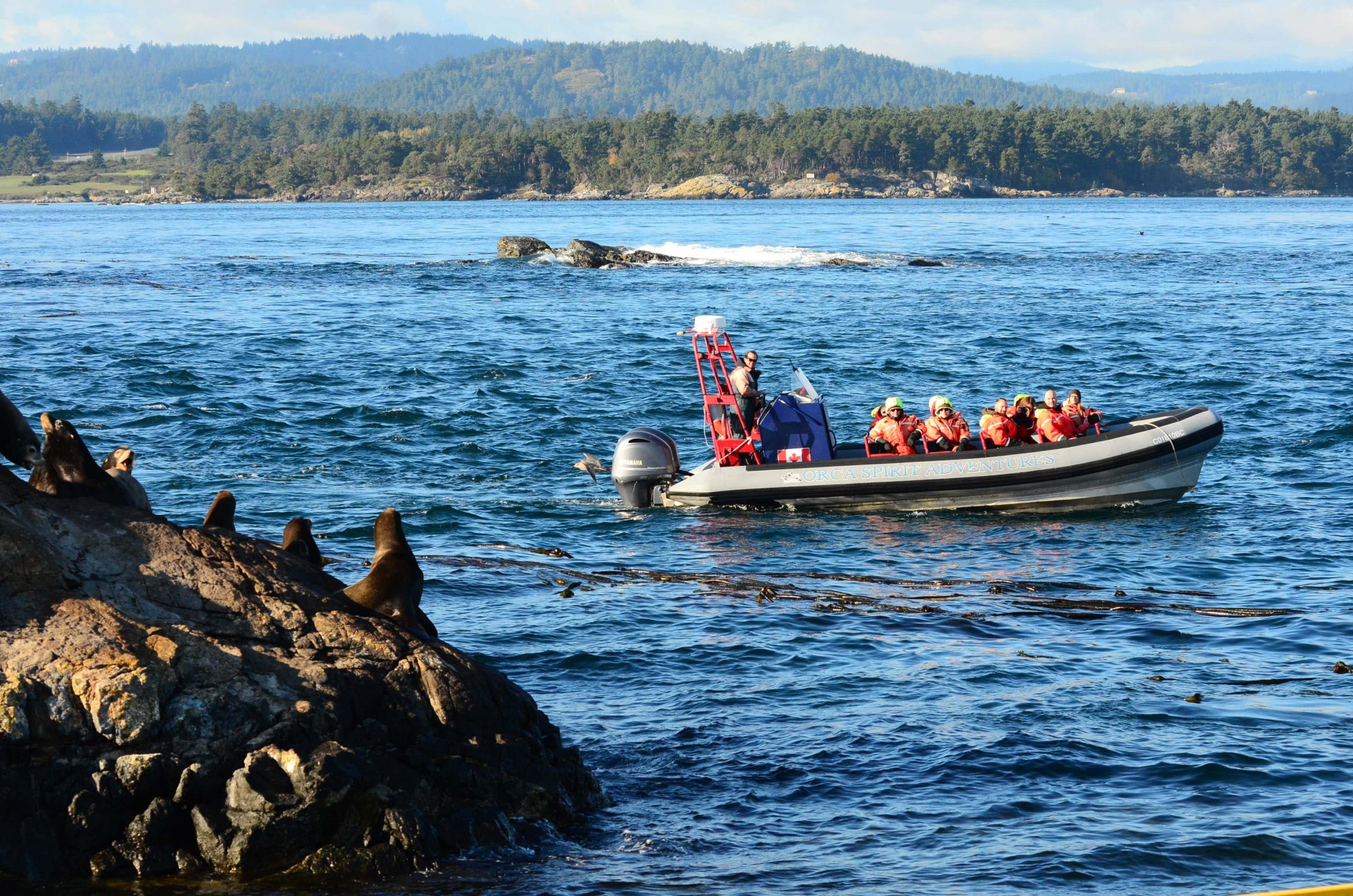 November 9, 2015 Whale watching closer than is allowed by the guidelines