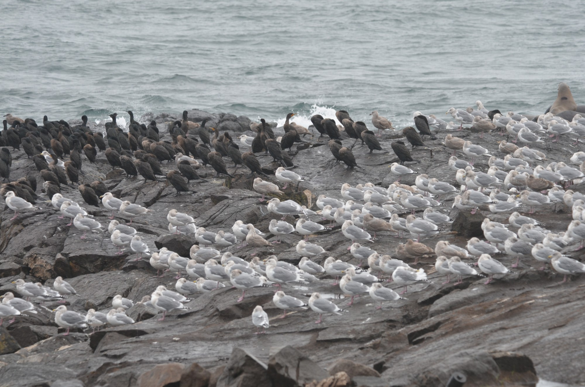 Flocks on the rocks