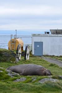 Elephant seal guarding the energy centre