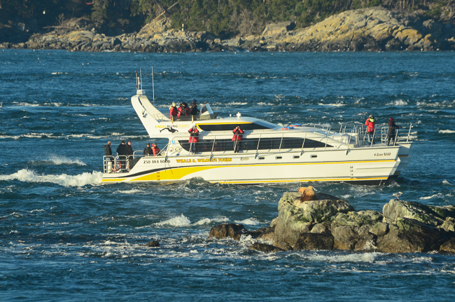 Jan. 5, 2016 The vessel appears much closer than 100 meters to sealion on Turbine Rock