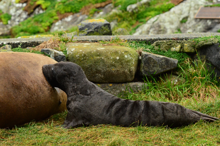 eseal pup day 2