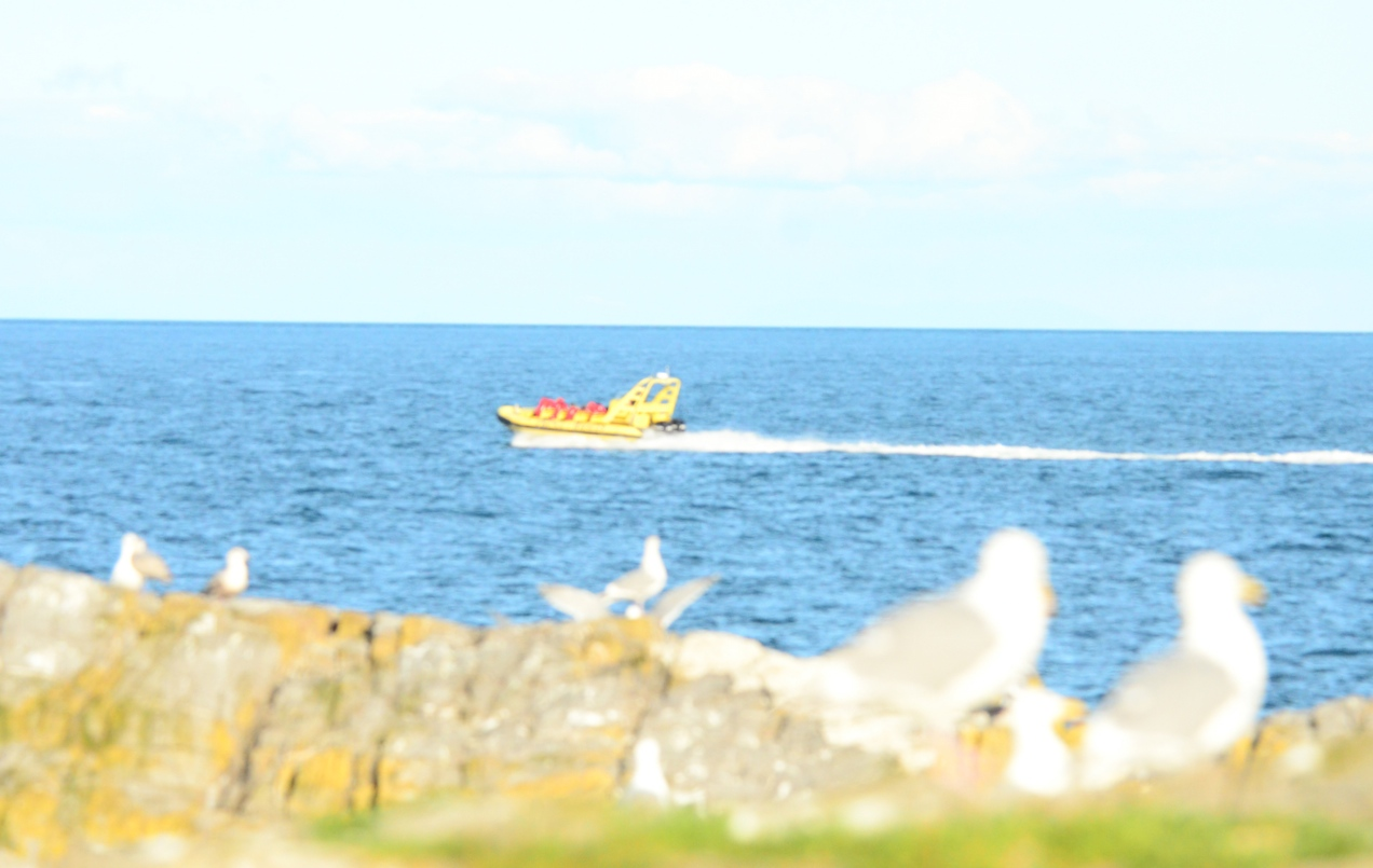 Looked like a new boat speeding in the protected area.