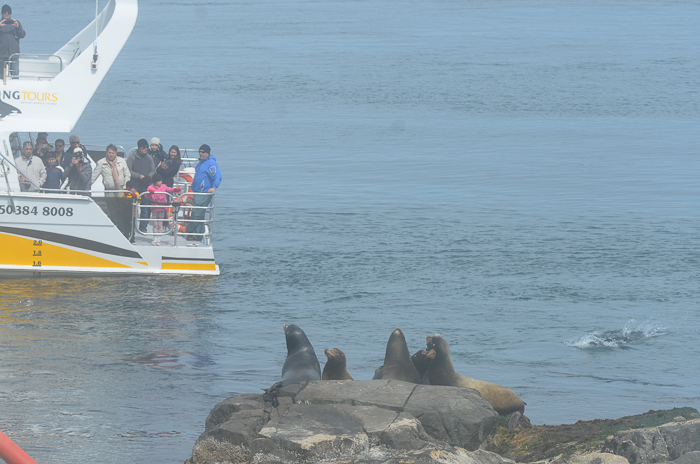 1st, notice sea lion in water