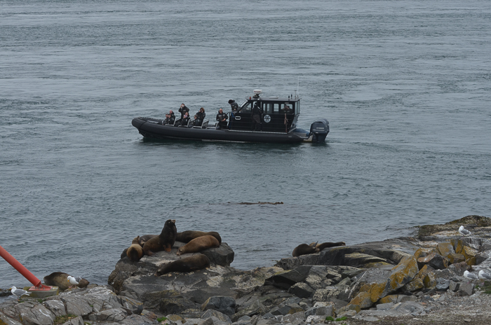 9th eco-tour and sea lions