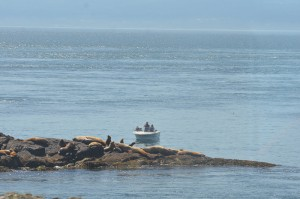 Boat and sea lions