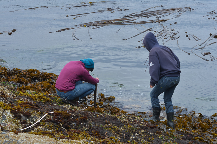 Intertidal Transect