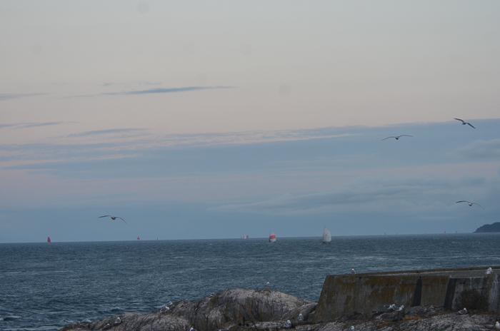 Early morning sailboats
