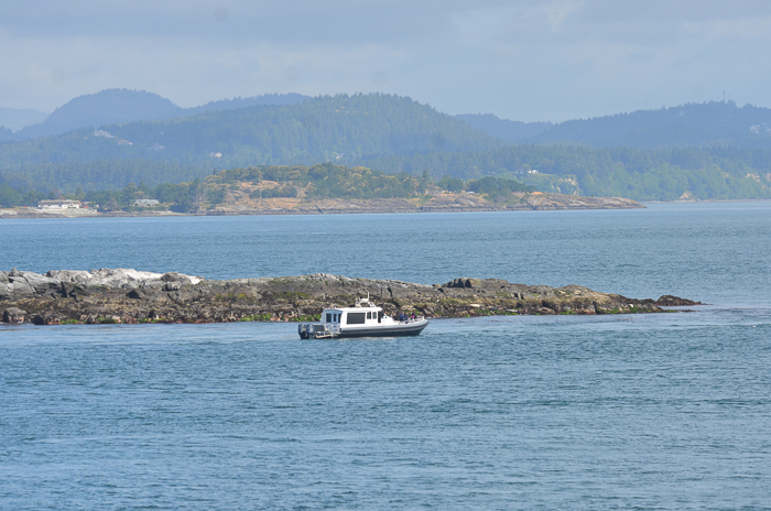Eco-tour and harbour seals