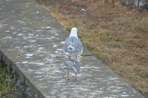 Tower of gulls