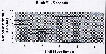 rock1shade1