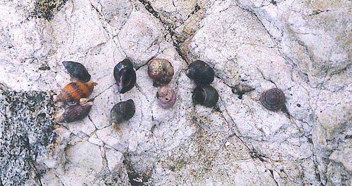 snailcol2-1