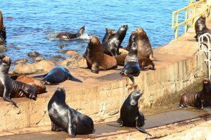 sea-lions-2-28-9