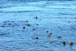 sea-lions-28-9