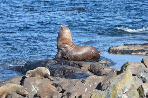 sea-lions-2-10-10