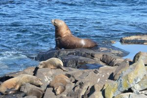 sea-lions-4-10-10