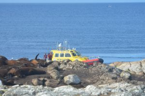 search-rescue-1-9-10