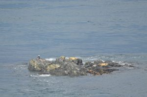 2 Eagles, 5 Harbour Seals