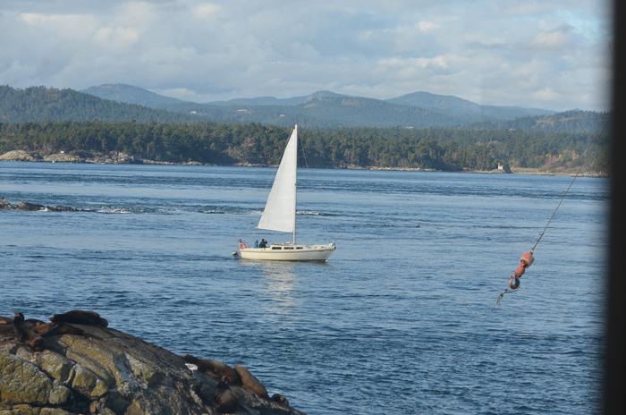 sailboat-6-11