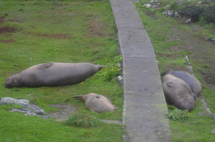 sleeping-e-seals-13-11