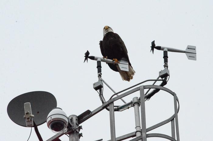 dec-26-eagle