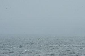 humpback-dec2